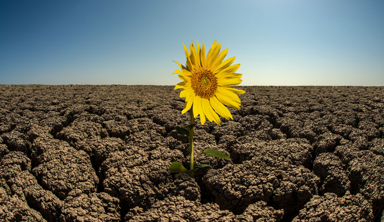 a healthy flower standing on dry cracking dirt to depict flowers in the desert