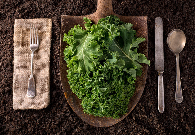 fall garden tips says kale grows best in fall; harvested kale with silverware set up